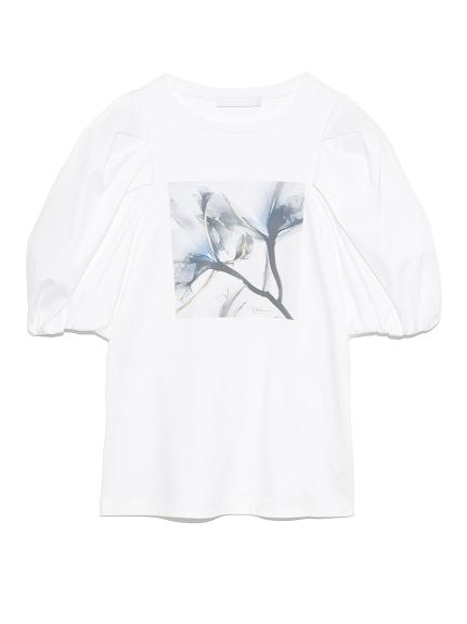 Albert Koetsierボリューム袖Tシャツ