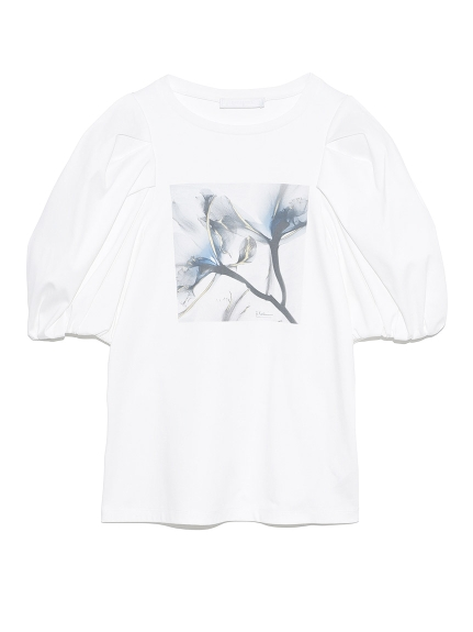 Albert Koetsierボリューム袖Tシャツ   CWCT211098